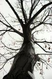 Fossano en invierno fotos de archivo