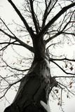 Fossano in winter. Texture of the branches of a tree in winter Stock Photos