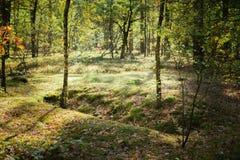 Fosse di guerra mondiale di vecchio mondo in Forest Since Second fotografie stock libere da diritti