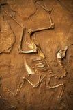 Fossiel royalty-vrije stock fotografie