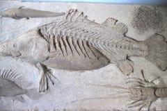 fossiel Royalty-vrije Stock Foto