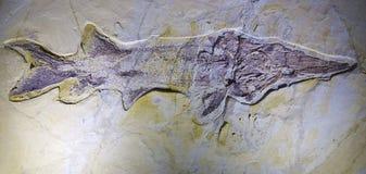 fossiel Stock Fotografie