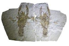 fossiel Stock Foto