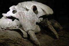 fossiel royalty-vrije stock afbeeldingen