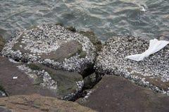 Fossiel shell strand Royalty-vrije Stock Afbeeldingen