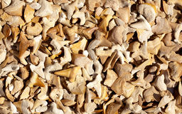 Fossiel van haaitanden en echte degenen Stock Foto