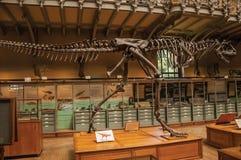 Fossiel van vleesetende dinosaurus bij Galerij van Paleontologie en Vergelijkende Anatomie in Parijs Royalty-vrije Stock Foto's