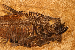 Fossiel vissendetail Stock Foto's