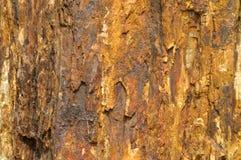 Fossiele houten kleur en textuur als ijzerroest Royalty-vrije Stock Afbeelding