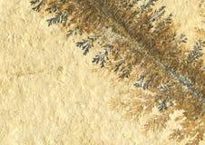 Fossiele installatieachtergrond stock foto