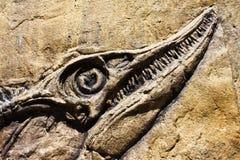Fossiele oude vissen Royalty-vrije Stock Afbeelding