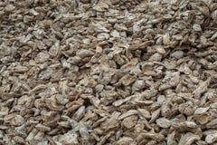 Fossiele overblijfselen van shell Stock Fotografie