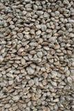 Fossiele overblijfselen van shell Royalty-vrije Stock Foto's