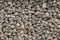 Fossiele overblijfselen van shell Royalty-vrije Stock Afbeeldingen