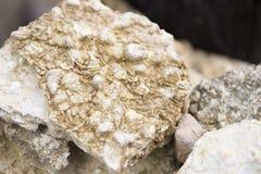 Fossiele overblijfselen van tweekleppige schelpdieren in Krabi stock afbeeldingen
