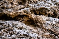 Fossiele steen met oude installatie en vegetatietextuur stock fotografie