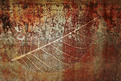 Fossil #1. Leaf fossil montage design elements Stock Photo