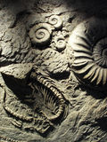 Fossil. Artificial fossils on a wall in an aquarium Royalty Free Stock Photography