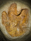 Fossil. View of a Fossil of a Dinosaur's footprint Royalty Free Stock Photos