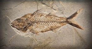 Fossil Lizenzfreie Stockbilder