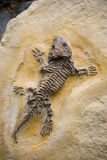 Fossil Seymouria stock photos