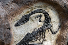 Free Fossil Stock Photography - 3233572