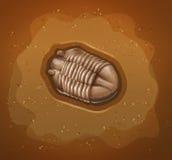 fossil Stockbild
