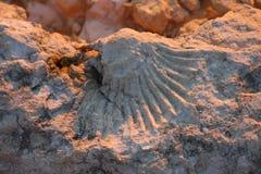 fossil Imagens de Stock