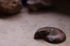 Fossil_1 стоковое изображение