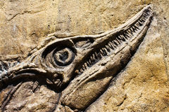 Fossil ancient fish Royalty Free Stock Image