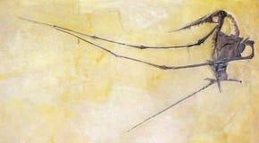 Fossil av en bevingad förhistorisk reptil royaltyfria bilder
