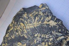 Fossil- avtryck för trädormbunke arkivbilder
