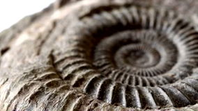 Fossil B Stock Photography