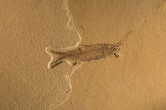 Fossil Stock Images