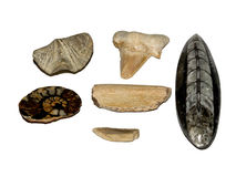 Fossil collection. A variety of fossils together Royalty Free Stock Photography