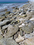 Fossil coral beach in Bonaire, Caribbean Royalty Free Stock Photos