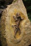 Fossil der Eidechse Stockfotografie