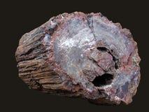 Fossil des alten Baums Stockbild