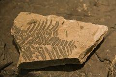 Fossil des Blattes Stockbilder