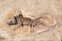 Fossil des prähistorischen Eidechsenskeletts auf dem Felsen Lizenzfreie Stockfotografie