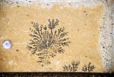 Fossil design. Botanical black fossil design over yellow stone Royalty Free Stock Images