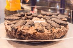 Fossil of dinosaur eggs. Ancient dinosaur eggs lay around royalty free stock photos