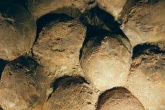 Fossil- dinosaurieägg Arkivfoto