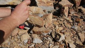 Fossil Excavation and Extraction. 'Fossicking', Fossil hunting excavation and extraction using a pick to spilt rocks to expose fossils. This is commonly done by stock video