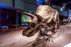 Fossil Exhibit in Royal Tyrrell Museum Stock Photos