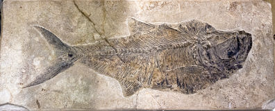 Fossil of a fish in stone Stock Photo