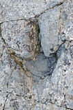 Fossil footprints Royalty Free Stock Photo
