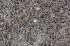 Fossil- fragment med fina havspebbles Arkivbilder