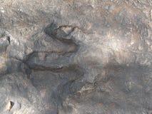 Fossil of herbivorous dinosaurs` footprint at Phu Kum Khao Royalty Free Stock Photo