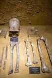 Fossil human. Skull fossil of DaLongtan man,Liuzhou,China.(mesolithic age royalty free stock photos